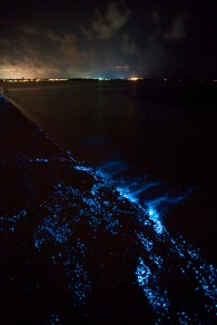 Bioluminescent_SeaSparkle_Maldives_4689