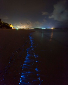 Bioluminescent_SeaSparkle_Maldives _4708