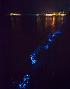 Bioluminescent_SeaSparkle_Maldives_4710