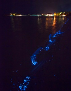 Bioluminescent_SeaSparkle_Maldives_4710